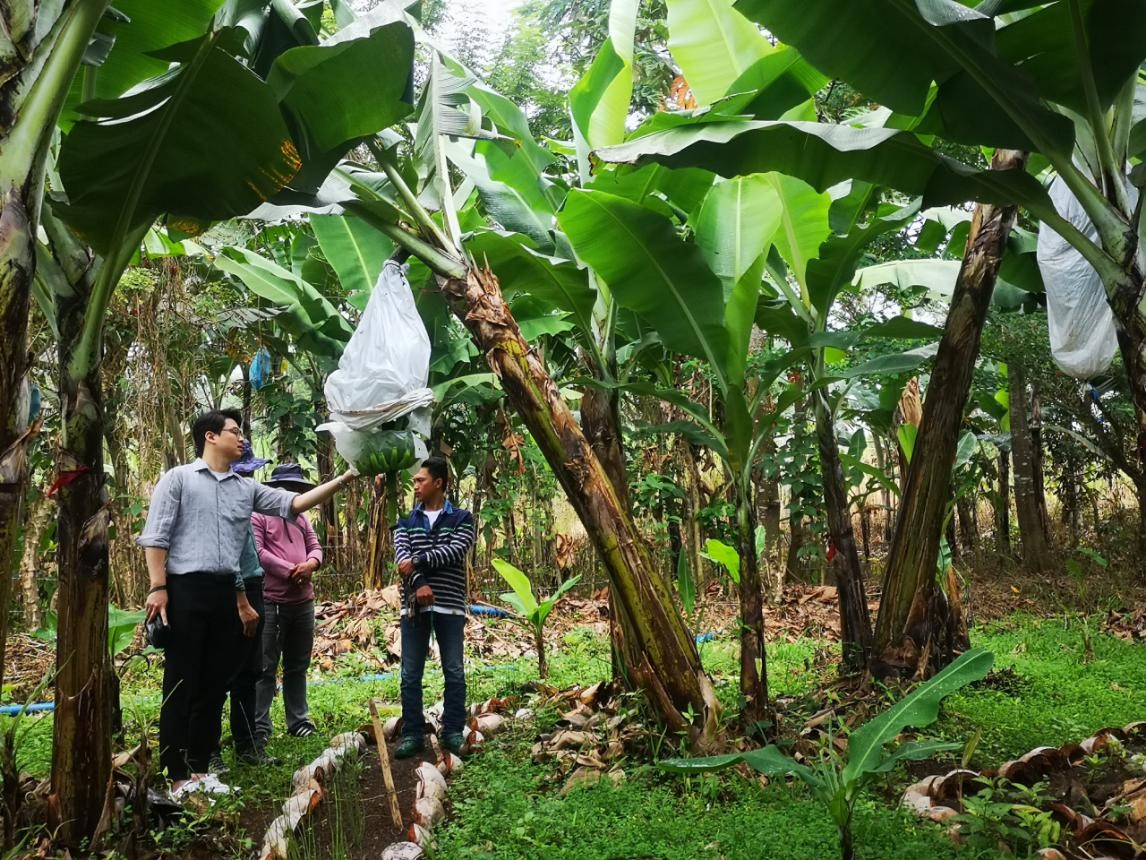 New Supply Chain Development Initiative: Cavendish Banana in The Philippines